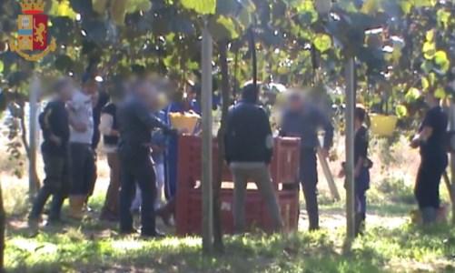 Caporalato, nove arresti nella piana di Gioia Tauro: sfruttavano migranti nei campi