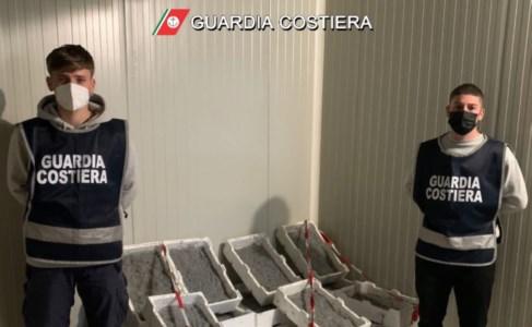 Sibaritide, fermato furgone con a bordo più di 2 tonnellate di novellame di sarda