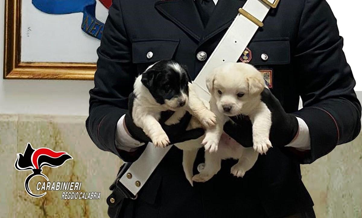 Due dei cuccioli salvati
