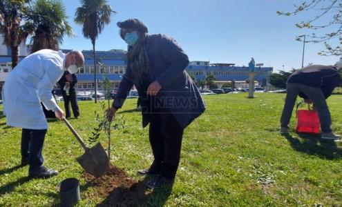 Lamezia, piantati alberi di ulivo per ricordare le vittime del Covid