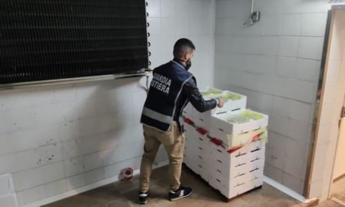 Strongoli, sequestrati cento chili di bianchetto: sanzioni per 4mila euro