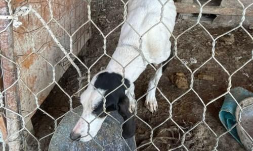 Crotone, cani e maiali in allevamento fatiscente: una denuncia per maltrattamenti