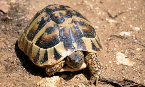 Gioia Tauro, 3 tartarughe nascoste illegalmente in un negozio: denunciato proprietario