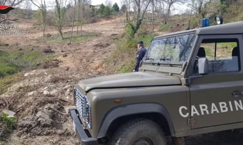 Lavori abusivi in un'area boschiva, denunciato un uomo nel Cosentino