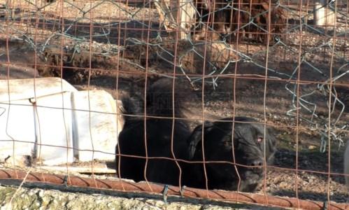 Lamezia, il canile è sotto sequestro ma i cani adottati non possono lasciare la struttura