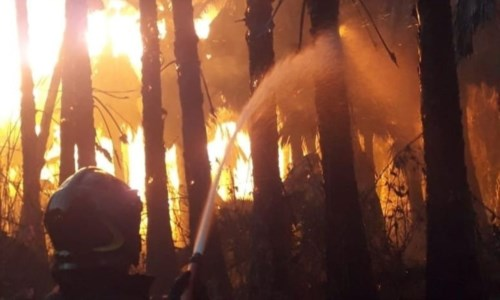 Lamezia, vasto incendio in un vivaio: fiamme alte e panico tra gli abitanti della zona