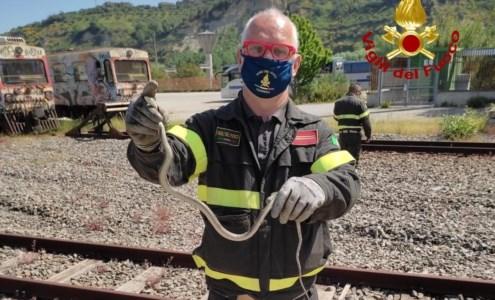 Trovato un serpente su un autobus di Cosenza, recuperato e rimesso in libertà