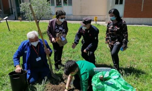 """Lamezia, il progetto """"Un albero per il futuro"""" dei carabinieri fa tappa nella scuola di Sant'Eufemia"""