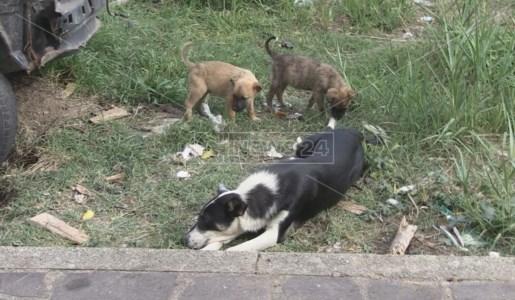 Cani randagi nel cosentino