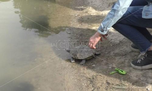 Crotone, nel laghetto di Parco Pitagora tornano le tartarughe