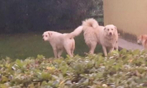 Due cani uccisi a colpi di pistola nel cosentino, la proprietaria: «Una vera e propria esecuzione»