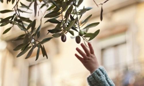 """In Calabria è tempo di """"slupatura"""" sociale: come negli ulivi, via il legno marcio per rinascere sani"""