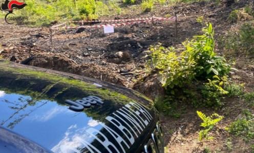 Montalto Uffugo, brucia vecchi pneumatici: denunciato manovale boscaiolo