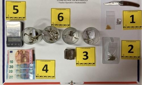 In casa funghi allucinogeni e droghe psichedeliche: arrestato 34enne nel Catanzarese