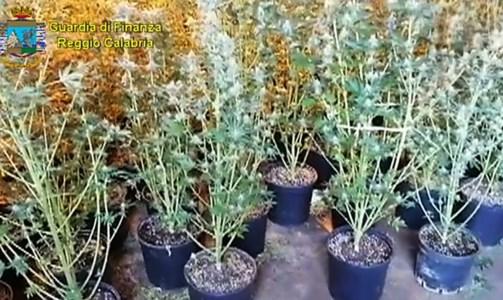 Un laboratorio per coltivare marijuana in garage: un arresto a Siderno