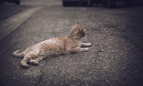 Gatto ucciso a bastonate a San Nicola Arcella, il Comune: «Comportamento criminale e disumano»