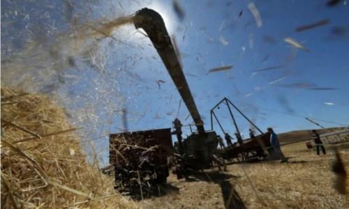 Piemonte, bimbo di 10 anni muore travolto da un getto di grano appena trebbiato