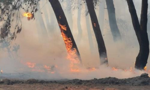 Il Sud bruciaIncendi, i vescovi calabresi: «Piromani assassini ambientali»