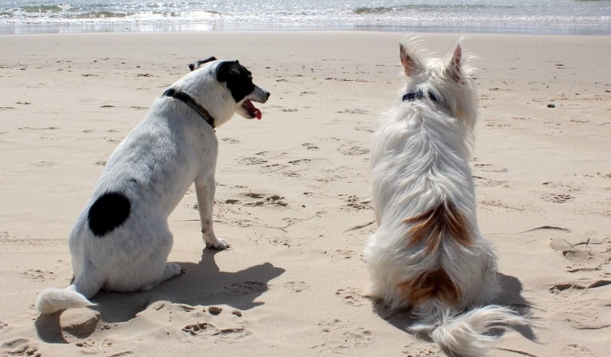 Cani in spiaggia, foto da pixabay
