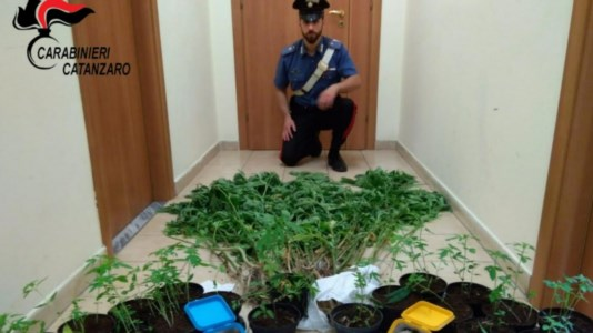 Vallefiorita, 64 piante di marijuana nel giardino di casa: arrestato 67enne