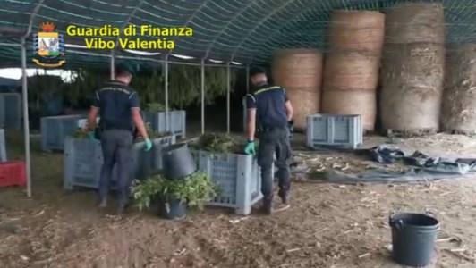 Quintali di marijuana coltivati a Pizzo dalla cooperativa Santacroce: 4 condanne e un'assoluzione