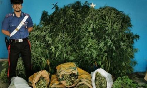 Isola Capo Rizzuto, coltivazione e spaccio di marijuana: arrestato 40enne