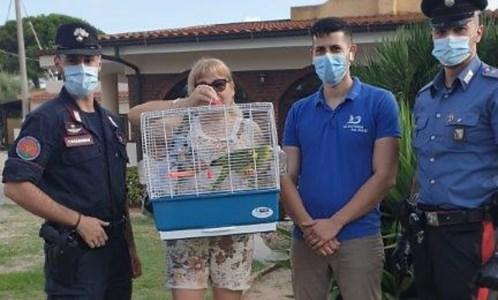 Ricadi, pappagallo in fuga recuperato e restituito alla proprietaria