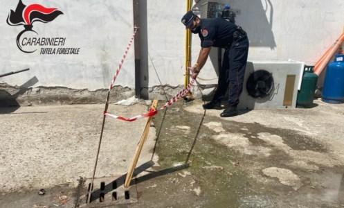 Lo scarico illecito scoperto dai carabinieri forestali