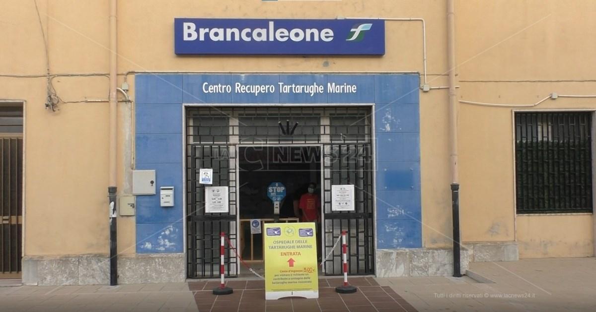Centro Recupero Tartarughe Marine di Brancaleone