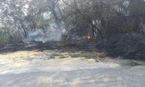 Paura nel CosentinoVasto incendio a Rende minaccia abitazioni, distrutti diversi terreni