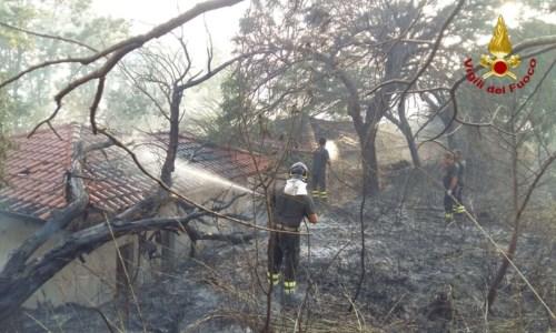Giornata di fuoco nel Vibonese: incendi distruggono 16 ettari di boschi e macchia mediterranea