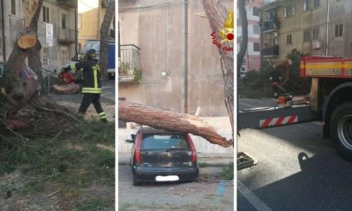 Vibo Valentia, albero cade su un'auto in sosta: tragedia sfiorata