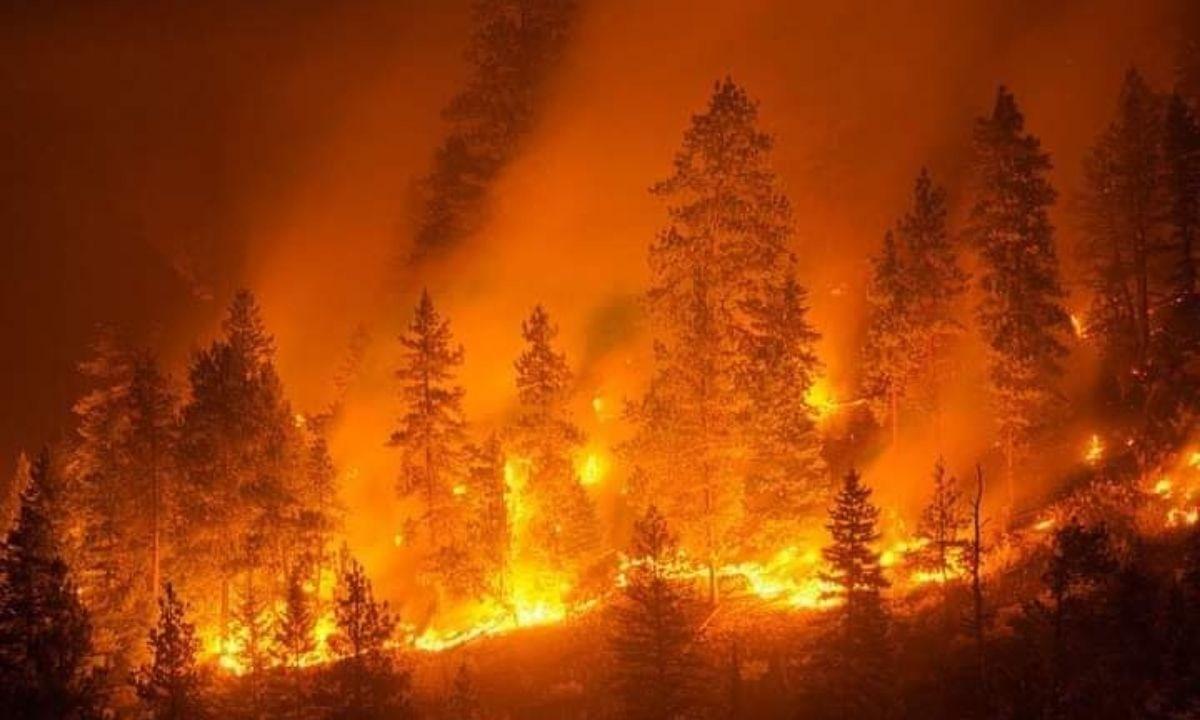 Uno degli incendi che ha distrutto boschi e campi nell'area Grecanica della provincia di Reggio Calabria
