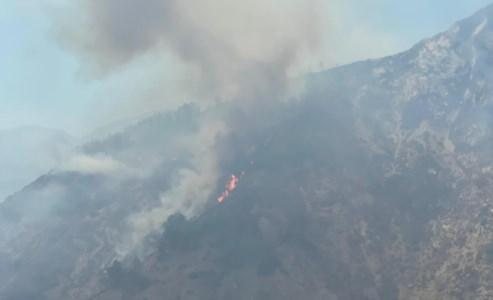 La Calabria bruciaIncendi in Aspromonte, le faggete Unesco a rischio: «Non ci sono Canadair e il rogo ha ripreso vigore»