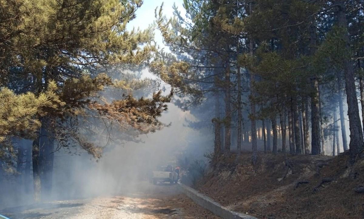 Foto del Parco nazionale dell'Aspromonte