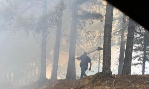 Calabria in fiammeIncendi, Pd ed Europa Verde chiedono alla Regione di revocare l'apertura della caccia