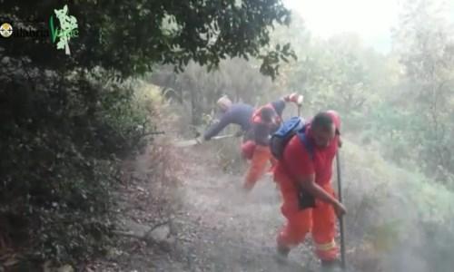 Gli operai di Calabria verde a lavoro