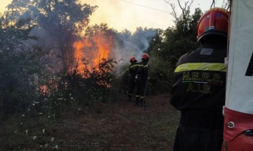 La Calabria bruciaIncendi, roghi nel Reventino: da 48 ore in fiamme la zona boschiva tra Platania e Decollatura