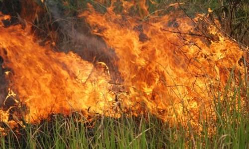 Calabria in fiammeIncendi, il Codacons: «La Regione dica se ha messo in atto tutte le misure previste dalla legge»