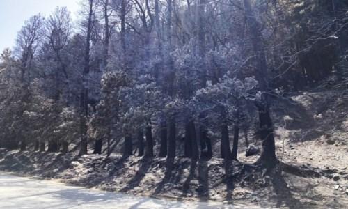 Calabria devastata dai roghiIl triste Ferragosto dell'Aspromonte: dopo gli incendi solo paesaggi lunari e odore acre di fumo