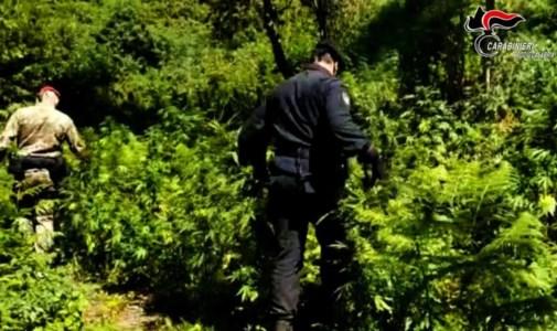 Coltivano marijuana nel parco Aspromonte: arrestati zio e nipote
