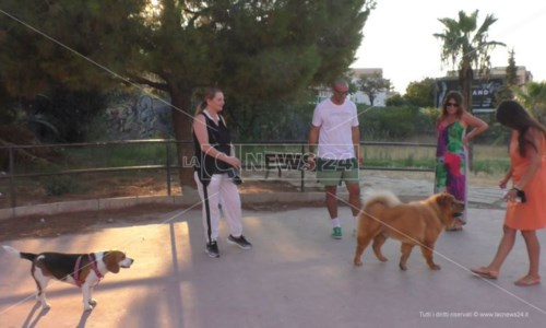 L'iniziativaCrotone, il Parco dei glicini divorato dal degrado. I cittadini: «Fatecelo adottare per portarci i nostri cani»