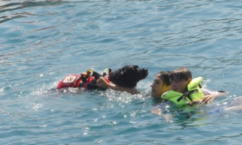 L'esercitazioneGli eroi a quattro zampe protagonisti nelle acque di Vibo Marina