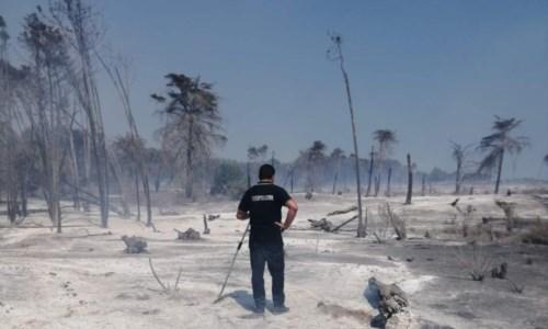 Calabria in fiammeIncendi, un deserto di cenere: ecco cosa resta a Isola Capo Rizzuto della pineta di Sovereto