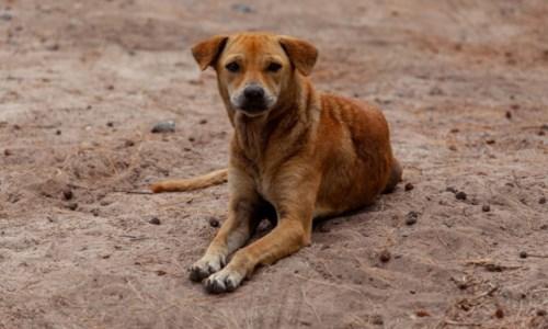 Il casoA Vibo cani morti avvelenati, l'Enpa lancia un appello: «Chi sa parli»