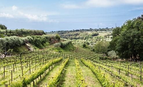L'azienda vinicola di Francavilla Angitola