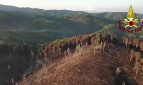 Calabria feritaLe riprese dal drone mostrano la devastazione dell'incendio, ecco cosa resta nell'area della diga del Menta