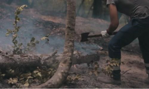 La Calabria bruciaDentro l'Aspromonte, cosa resta dell'inferno di fuoco: ecco il documentario nei luoghi dell'incendio