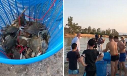Specie protette Pesca illegale di granchi nel canale degli Stombi nel Cosentino, raffica di multe