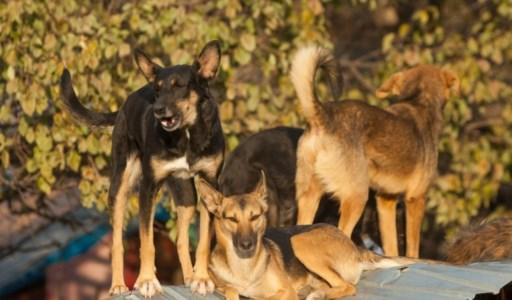 """Il dramma di SatrianoRagazza sbranata da un branco di cani, """"Stop animal crimes"""": «Randagismo problema serio»"""